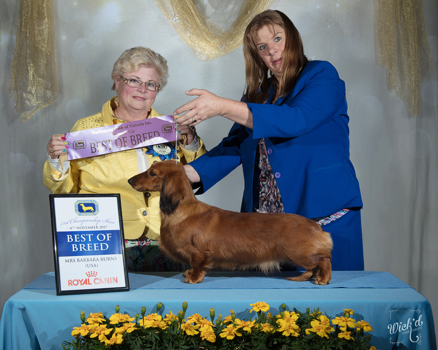 'Madonna' Best of Breed at the Dachshund Club of Victoria Inc. - 73rd Championship Show
