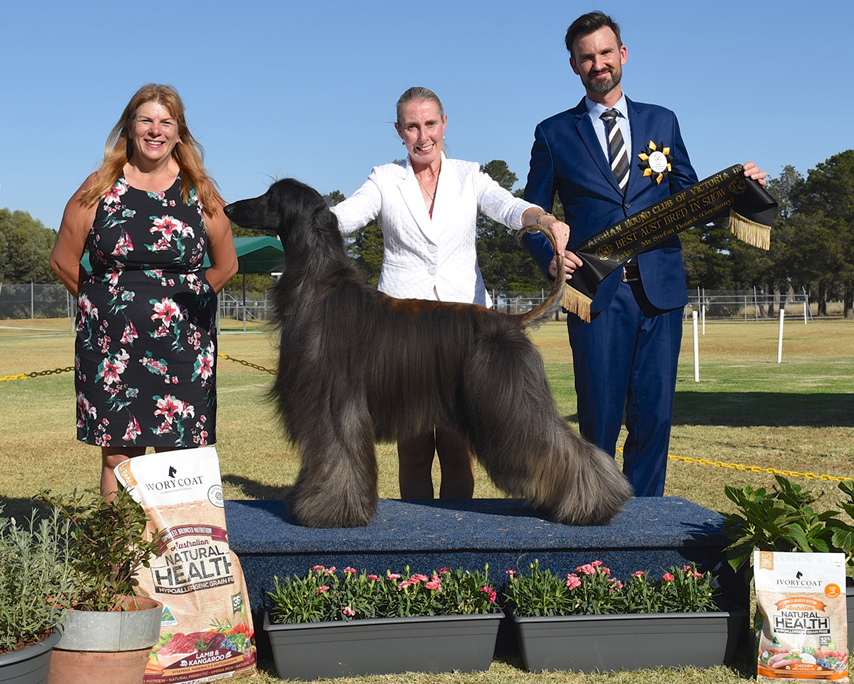 'Rim' Winning Best Australian Bred in Show at the 2018 Afghan Hound Club of Victoria Championship Show.