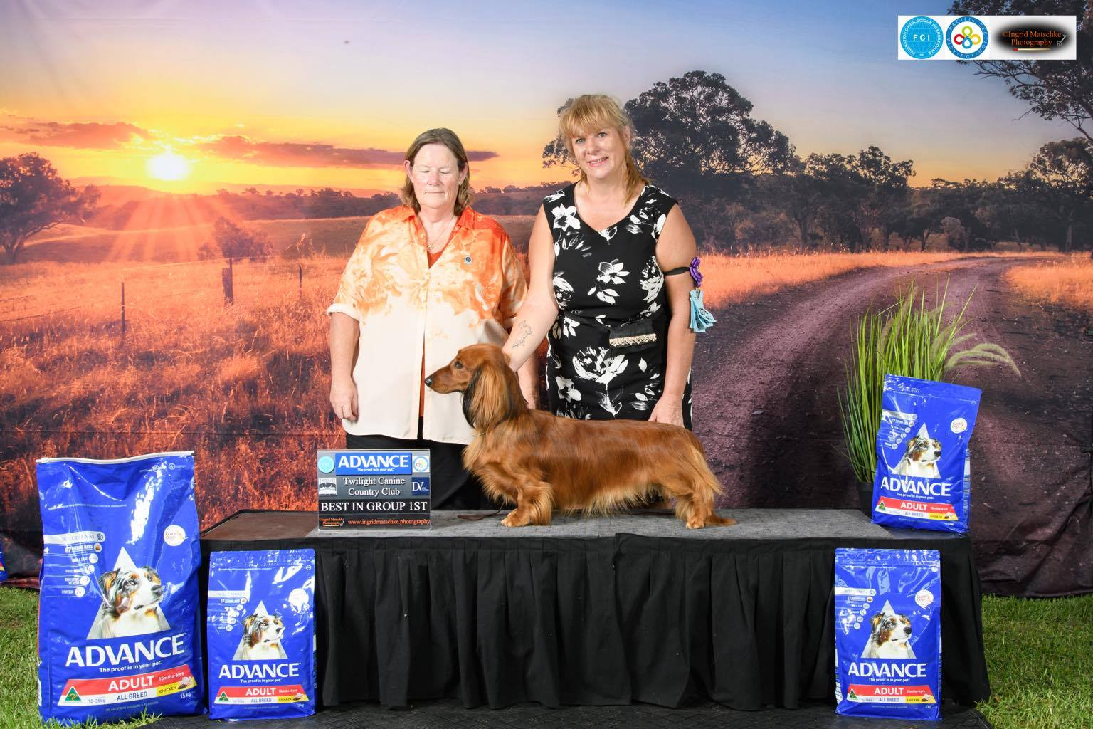 Aust. Ch. Belcara Dare Devil – 'Devil' – Best in Group at the Twilight Country Canine Club FCI All Breeds Championship Show.